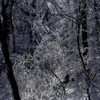 зимнее кружево :: Мария Климова