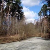 холодный пейзаж... :: Галина Филоросс