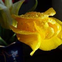 Цветов хочу, и солнца, и тепла..... :: LORRA ***