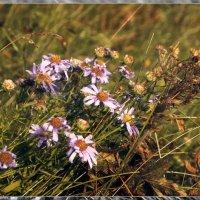 Лютики- цветочки... :: Сибирь Эвенкия Евгений Щербаков
