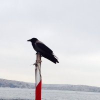 Стамбул :: Mila