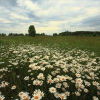 Вспоминая лето! :: Nikita Volkov