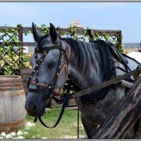 Рабочая лошадка :: Надежда