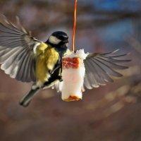 Кстати о птичках... И неужели это все моё... :: Александр Резуненко