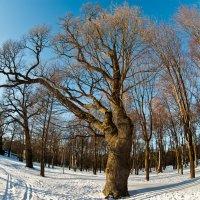 Зимний парк :: Alex Panfiloff