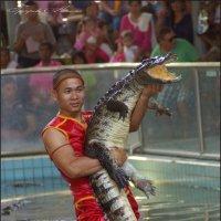 Шоу с крокодилами :: Наталия Григорьева