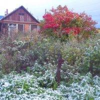 Деревенский пейзаж с первым снегом :: Владимир Ростовский