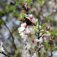 Весна в Израиле . :: vasya-starik Старик