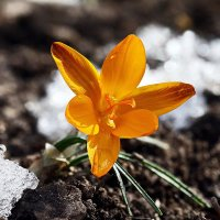 С душою нараспашку на солнечном холме... :: Валерий Басыров