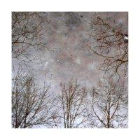 деревья-09 :: наташа савельева