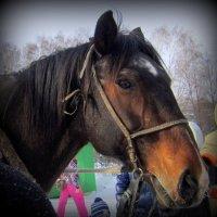 Портрет лошадки . :: Мила Бовкун