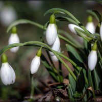 весна на носу :: Sergey Bagach
