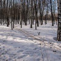 Лыжи у печки стоят. :: Яков Реймер
