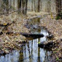 лесной ручей :: юрий иванов