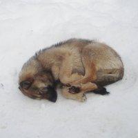 жизнь собачья... :: Галина Флора