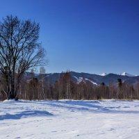 На берегу замерзшего озера :: Анатолий Иргл