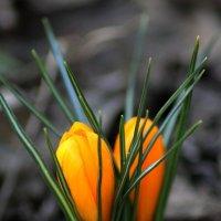 Первые весенние краски :: Marina K