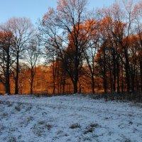 Морозное утро в лесу :: Мария Спивак