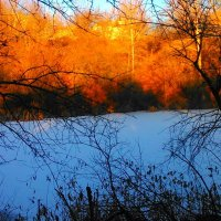 Морозное пламя :: Мария Спивак