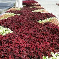 А летом вновь расцветут шикарные клумбы в нашем Подмосковном городе Люберцы! :: Ольга Кривых
