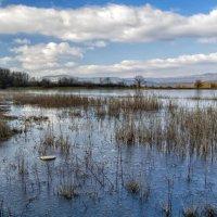 Неоттаявший пруд :: Игорь Кузьмин