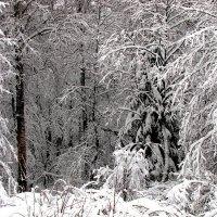 Зимняя  графика :: alek48s