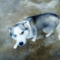 Вот такая собачка :: Светлана Лысенко