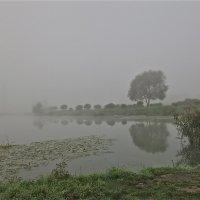 туман :: Елена