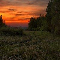 Одуванчики на закате :: Владимир Макаров