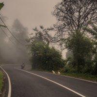 выезжая из тумана 1 :: Александр