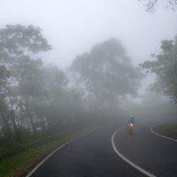 выезжая из тумана 2 :: Александр