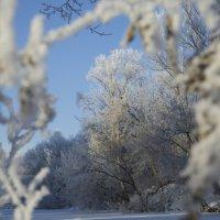зимняя картинка :: Мария Корнилова