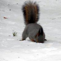 - Чую я, чую, тут орешком пахнет!!! :: Наталья Пендюк Пендюк
