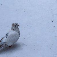 Птица волшебная и безупречная  - символ невинности и чистоты. :: Elena Izotova