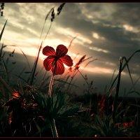 Аленький цветочек:) :: Margarita Sevyants