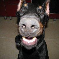 Кожаный нос :: Maribago Maribago