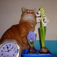 Самое время для цветов :: Елена Федотова