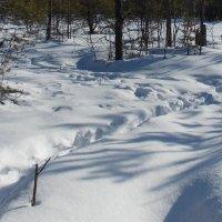 Следы на снегу. Автор Натан. :: Весна .