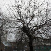 Вот  такое  дерево... :: Валерия  Полещикова