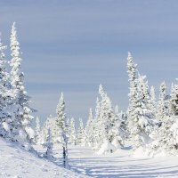 Зима :: Андрей Макаров