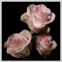 Три Розы... :: анна нестерова