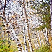 Пролетно :: Diyan Dikov