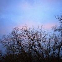 Одинокие деревья :: Мария Кальченко-Буланова