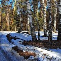 Неудержимо таяние снегов... :: Лесо-Вед (Баранов)