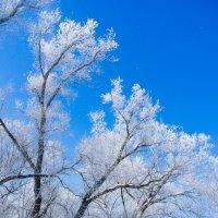 Последний день зимы :: Андрей Липов