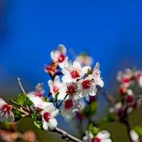 Весна... :: Виктор Чепишко
