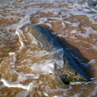 Море возвращает... :: Герович Лилия