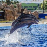 Дельфины :: Антон