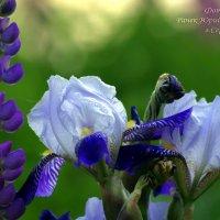 Цветы :: Юрий Рачек