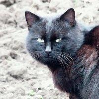 Дачный кот. :: Наталья